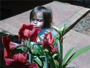 Scarletflowersniffer